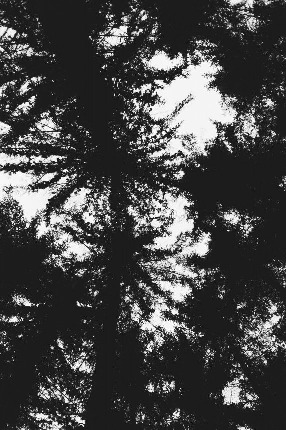 Forest Glade Photography by Marion Luttenberger (MediumLarge Studio)